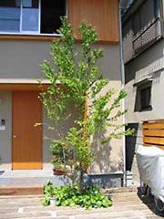 江戸川ソーラーキャット庭